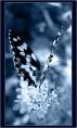 butterfly992