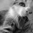 meow22