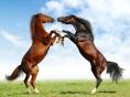 Macedonian.Horse