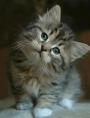 kitttey