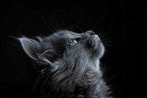 Cat.Lover
