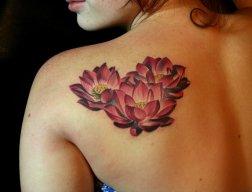 Lotus-14